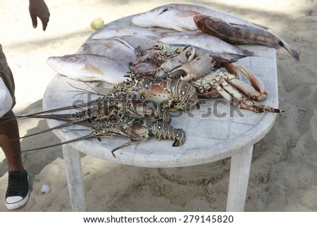 fresh fish and lobster , Fresh catch of fish and other seafood - stock photo