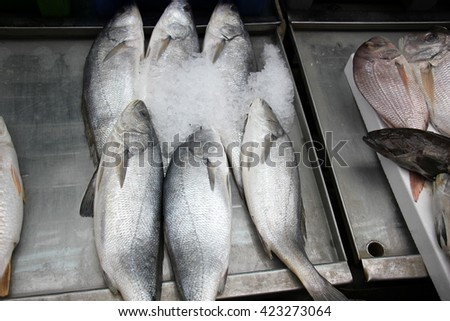 fresh fish at the market in Acre