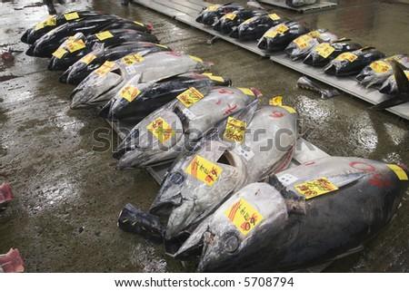 Fresh fish for sale at Tsukiji market in Japan - stock photo