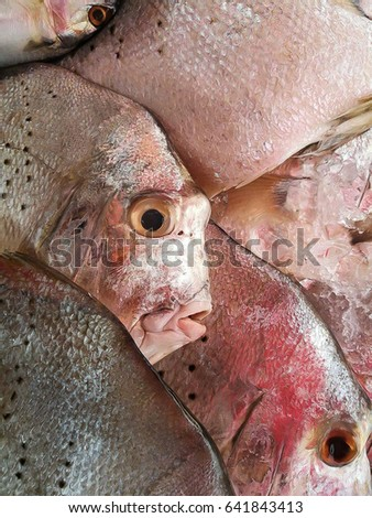 Fresh fish in seafood market