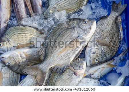 Fresh fish in the market