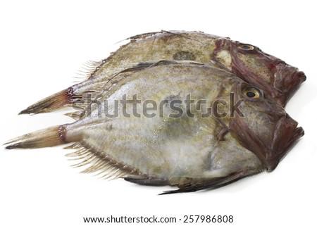 fresh fish isolated - stock photo