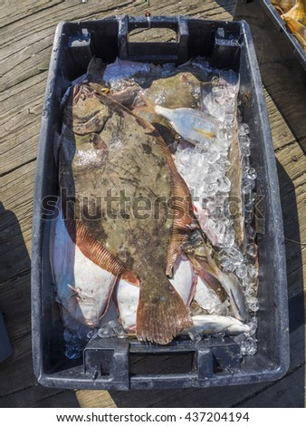 Fresh fish just caught and going to market - stock photo
