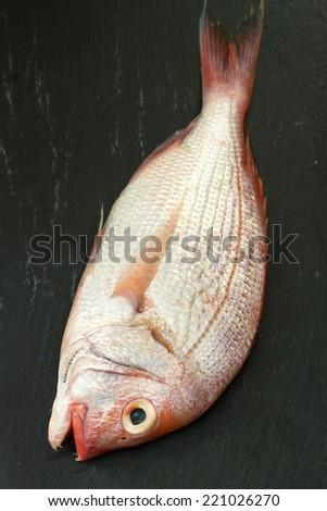 fresh fish on black background - stock photo