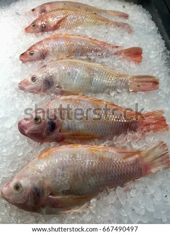Fresh fish on ice at the market