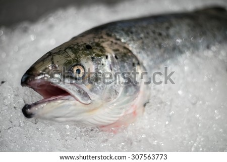 Fresh fish on ice in market just watching you before you buy them