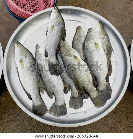 Fresh fishes at the fish market - stock photo