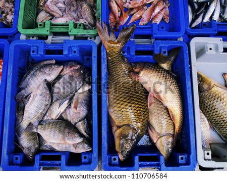 Fresh Fishes, Market in Israel - stock photo