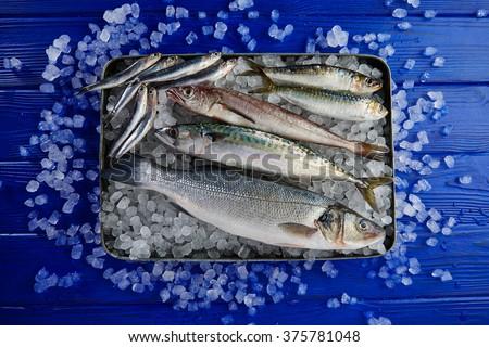 Fresh fishes mix hake seabass sardine mackerel anchovies on ice and blue wood - stock photo