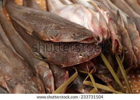fresh flathead fish  - stock photo