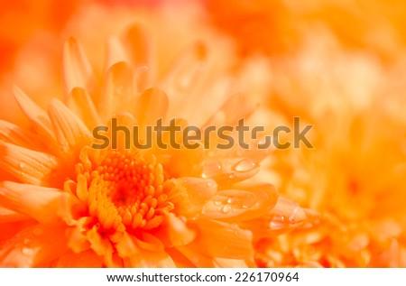 Fresh flower with raindrops under soft sunshine - stock photo