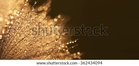 Fresh flower with water drops nature banner and greeting card idea - stock photo