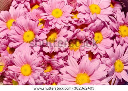Fresh Flowers Background