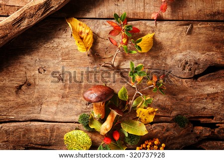 Fresh food from an autumn forest with a still life display of whole raw boletus mushrooms and rose hips artistically arranged on a rustic wooden background, overhead view - stock photo