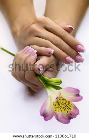 Fresh freesia in women's hands - stock photo