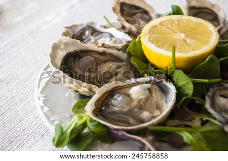 fresh French appetizer oysters on ice with lemon, for gourmets - stock photo