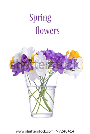 Fresh fresia flowers in vase isolated over white background - stock photo
