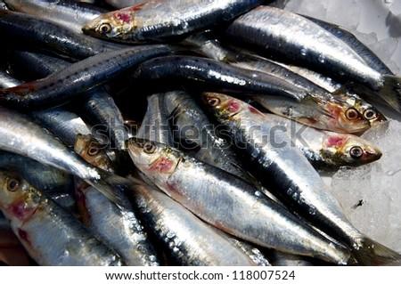 Fresh frozen sardines (pilchards) on ice - stock photo