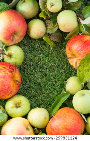 fresh garden apples on green grass and space for text, top view, vertical - stock photo