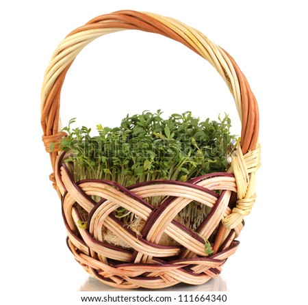 Fresh garden cress on basket isolated on white - stock photo