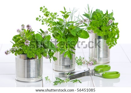 Fresh garden herbs in recycled tin cans on tiled worktop with scissors - stock photo