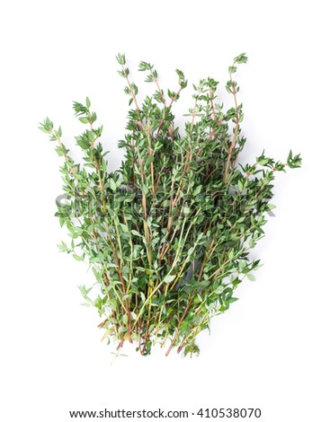 Fresh garden thyme herb. Isolated on white background - stock photo