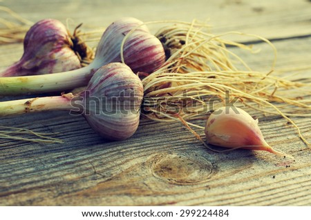 Fresh Garlic on the Wooden Table.