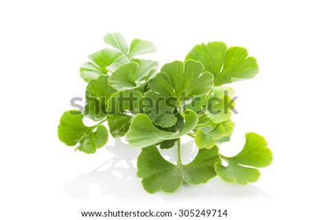 Fresh ginkgo biloba bunch isolated on white background. Alternative medicine herb, memory enhancement. - stock photo