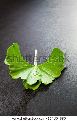 Fresh ginkgo biloba leaf with dew isolated on black background. Natural healthy food supplement. - stock photo