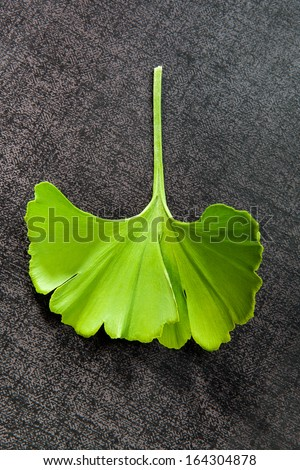 Fresh ginkgo leaf isolated on black background, top view. Alternative medicine, natural healing.  - stock photo