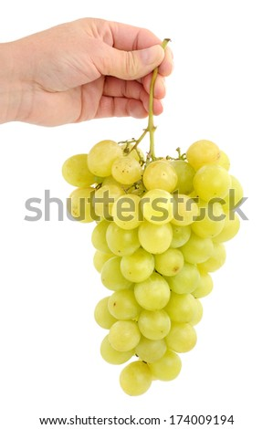 Fresh grape in front of a white background - stock photo