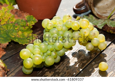 Fresh grape on the table - stock photo