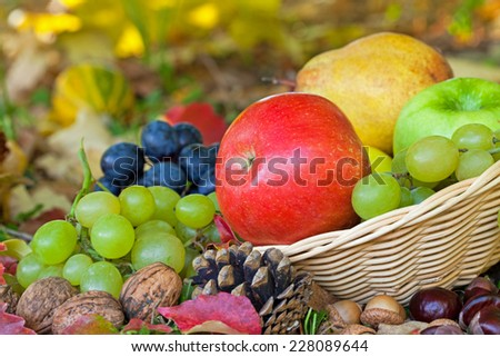 Fresh grapes, pears and apples in basket in autumn grass.