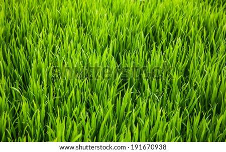 Fresh grass - stock photo