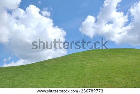 fresh grass and beautiful blue sky
