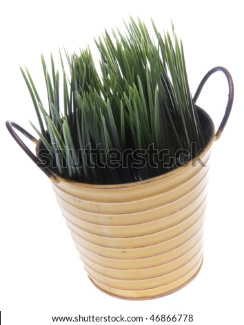 Fresh grass growing out of a worn can just in time for spring!  Isolated on white with a clipping path.
