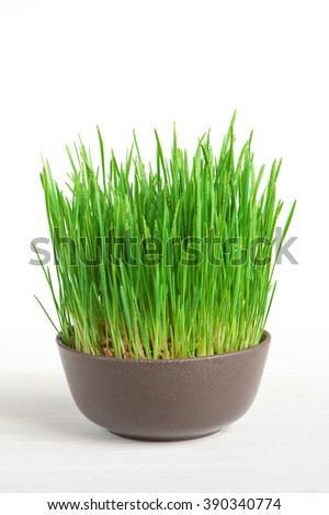 Fresh grass in the brown bowl