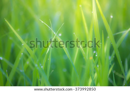 Fresh grass with dew drops and bokeh lights. Spring or summer background - stock photo