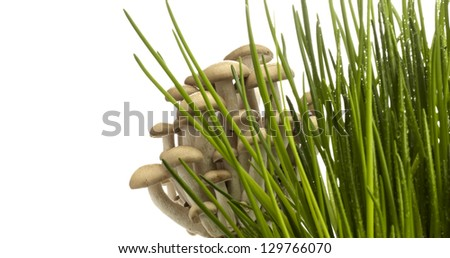 Fresh Grass With Dew Drops and mushroom - stock photo
