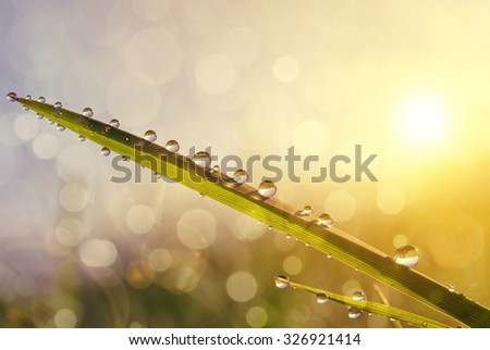 Fresh grass with dew drops at sunrise. Nature Background - stock photo