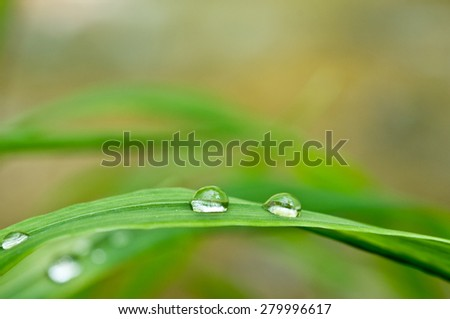 Fresh grass with dew drops close up. Selective focus, some drops in focus and some not.