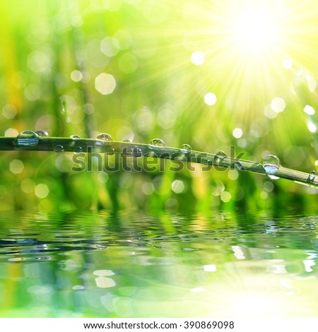 Fresh grass with dew drops closeup. Nature Background - stock photo