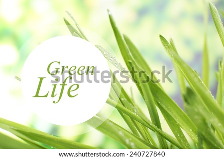 Fresh grass with dew drops, Green Life concept - stock photo