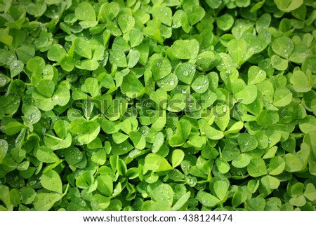Fresh green abstract background with clover leaves - stock photo