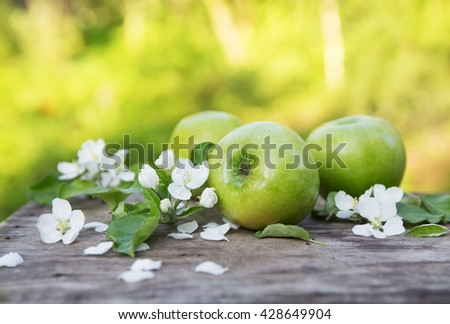Fresh green apples with flowers in the sunny garden