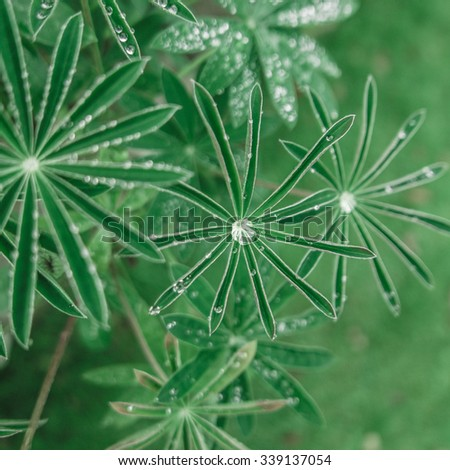 Fresh Green Background Of Water Droplets On Delicate Leaves - stock photo
