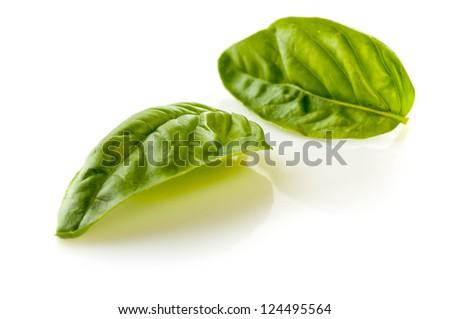 Fresh Green Basil Isolated on White Background - stock photo