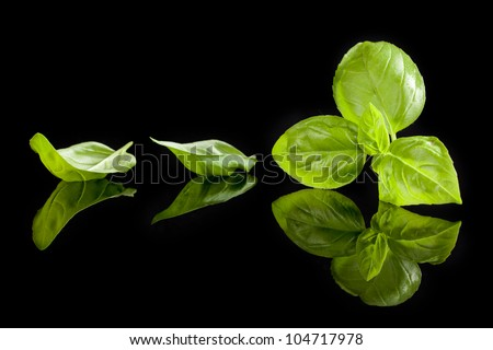 Fresh green basil leaves isolated on black background. Culinary aromatic cooking. - stock photo