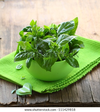 fresh green basil on a wooden table - stock photo