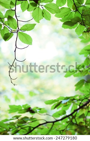 Fresh green birch tree leaves in springtime forest - stock photo